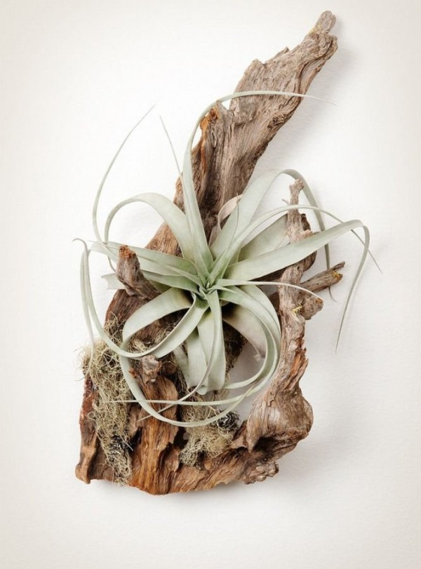 composiciones-de-plantas-y-madera-recuperada-del-mar-07