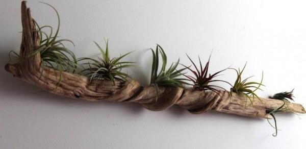 composiciones-de-plantas-y-madera-recuperada-del-mar-08