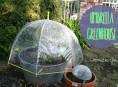 imagen Cómo hacer un mini invernadero con un paraguas