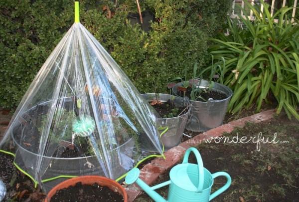 hacer-un-mini-invernadero-con-un-paraguas-04