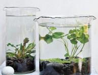 imagen Jardínes acuáticos de interior