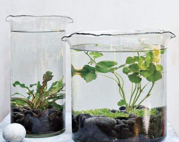 jardines-acuaticos-de-interior-01