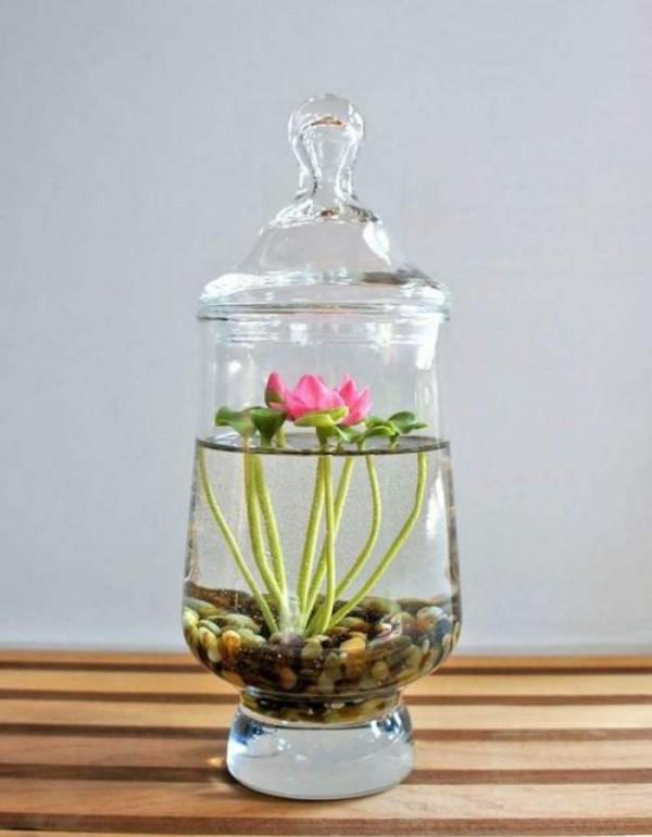 Jard nes acu ticos de interior for Plantas en agua interior