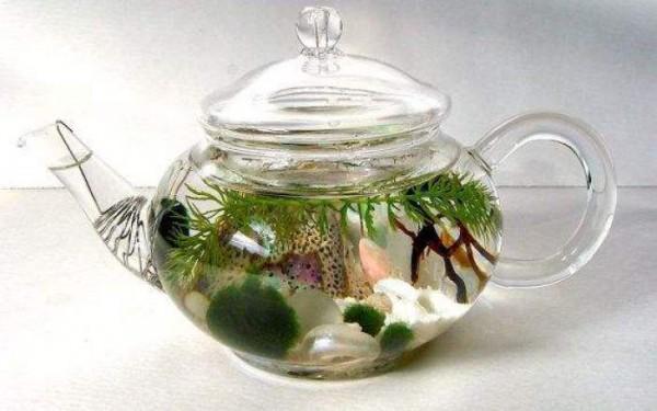 jardines-acuaticos-de-interior-09
