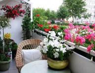 imagen Las mejores flores para el balcón