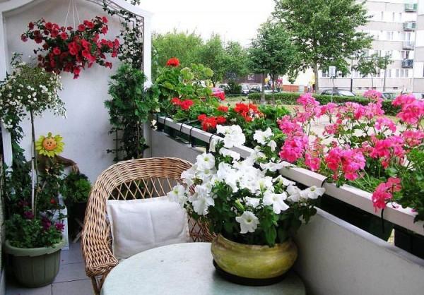 las-mejores-flores-para-el-balcon-01