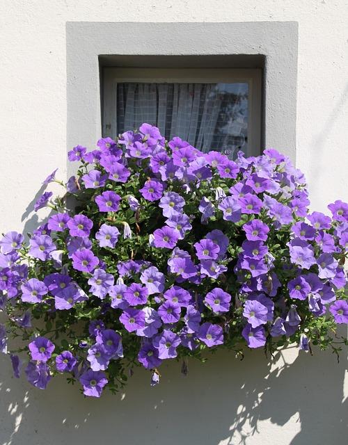 Las mejores flores para el balc n - Maceteros colgantes para balcones ...