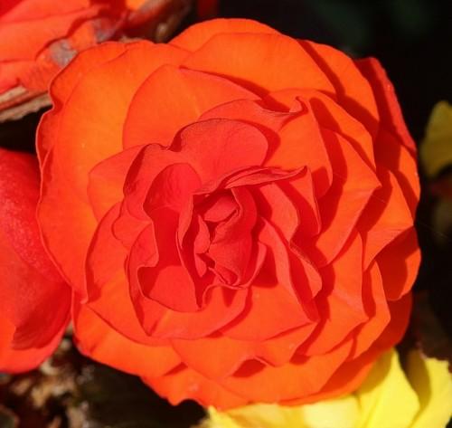 las-mejores-flores-para-el-balcon-04