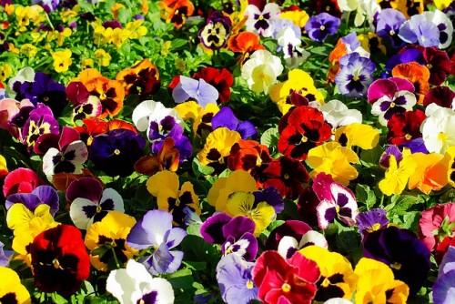 las-mejores-flores-para-el-balcon-06