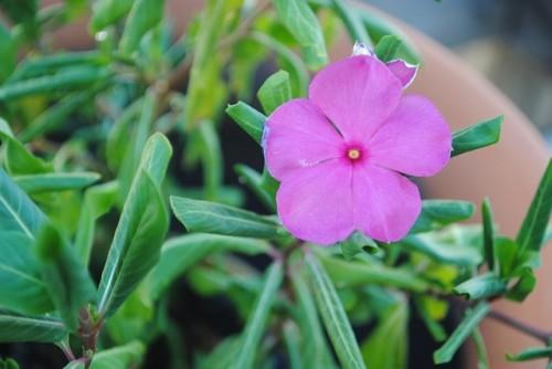 las-mejores-flores-para-el-balcon-07