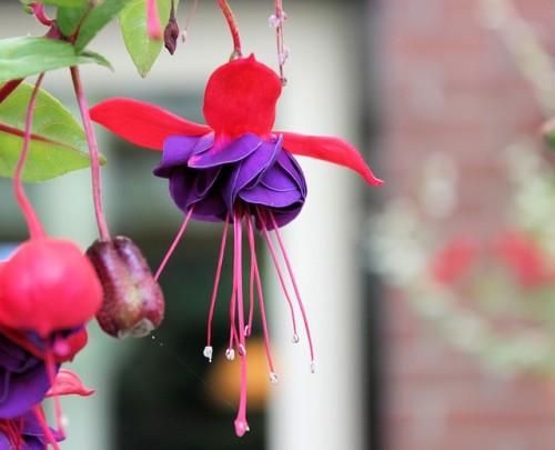 las-mejores-flores-para-el-balcon-10