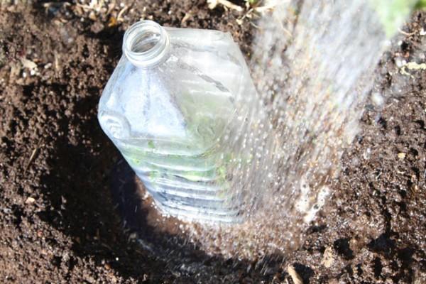 mini-invernaderos-con-envases-plásticos-04