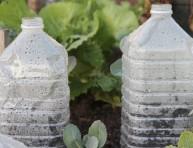 imagen Mini invernaderos hechos con envases plásticos