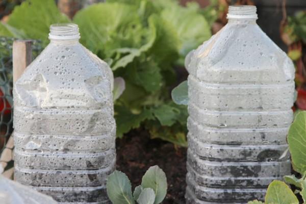 mini-invernaderos-con-envases-plásticos-06