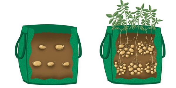 10-maneras-diferentes-de-cultivar-patatas-01