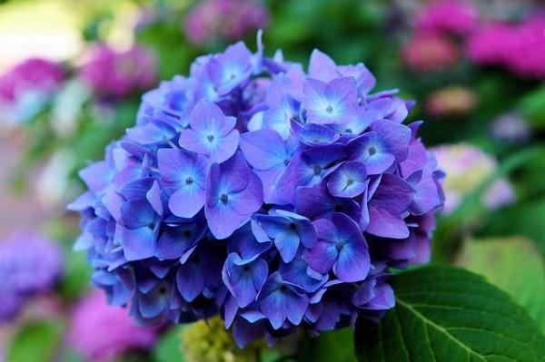 13 flores muy comunes que son venenosas