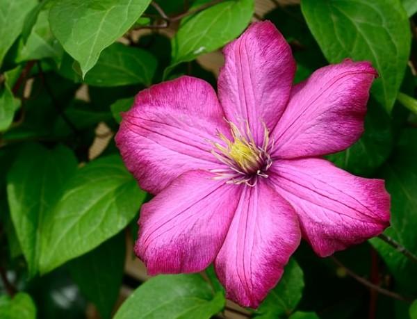 13-flores-muy-comunes-que-son-venenosas-02