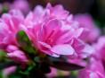 imagen 13 flores muy comunes que son venenosas