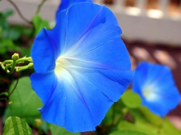 13-flores-muy-comunes-que-son-venenosas-10
