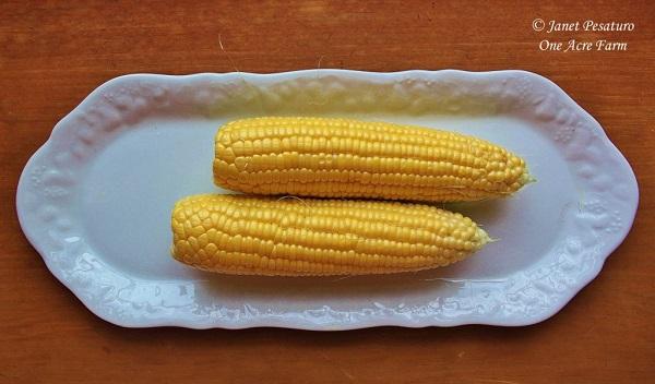 6-tips-para-cultivar-maiz-en-pequenas-superficies-07