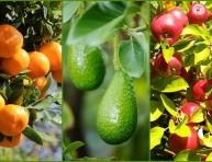 imagen 9 consejos para cosechar más fruta
