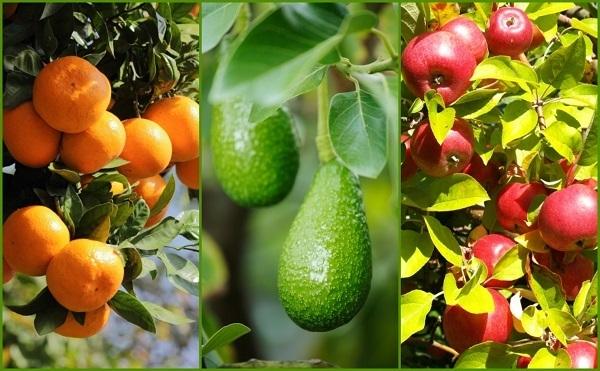 9-consejos-para-cosechar-mas-fruta-01