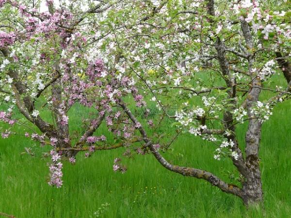 9-consejos-para-cosechar-mas-fruta-04