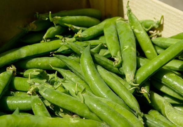 como-cultivar-guisantes-04