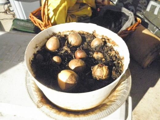 como-germinar-semillas-de-aguacate-con-exito-02