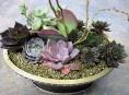 imagen Cómo montar un mini jardín de suculentas