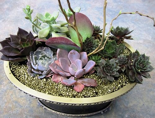 as-mount-un-mini-jardin-de-succulenta-02