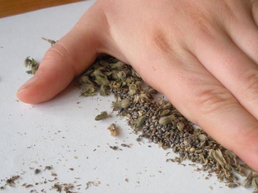 cultivo-y-recoleccion-de-la-chia-07