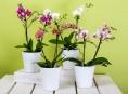 imagen Sencillo truco para regar correctamente tus orquídeas