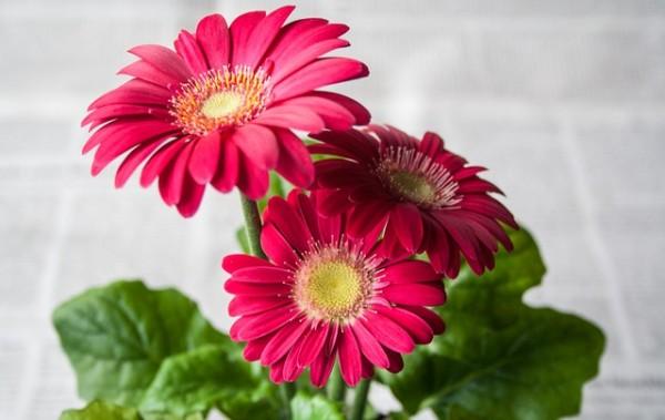 plantas-que-florecen-en-primavera-02