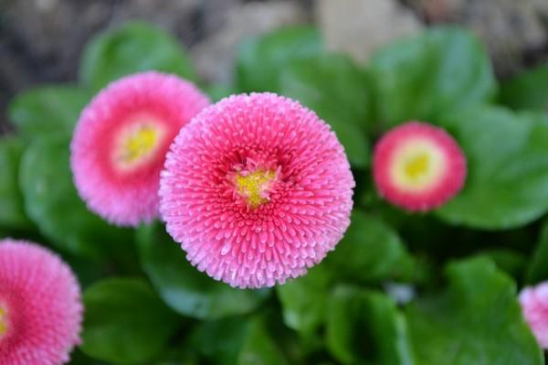 Algunas plantas que florecen en primavera - Plantas de exterior resistentes todo el ano ...