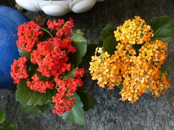 plantas-que-florecen-en-primavera-06
