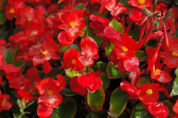 plantas-que-florecen-en-primavera-07
