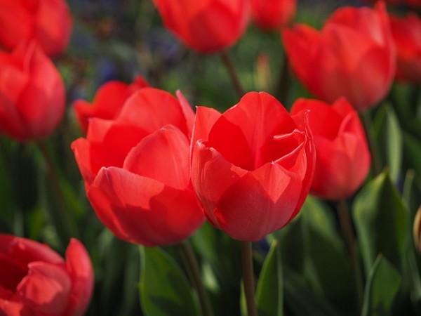 plantas-que-florecen-en-primavera-09