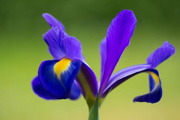 plantas-que-florecen-en-primavera-10