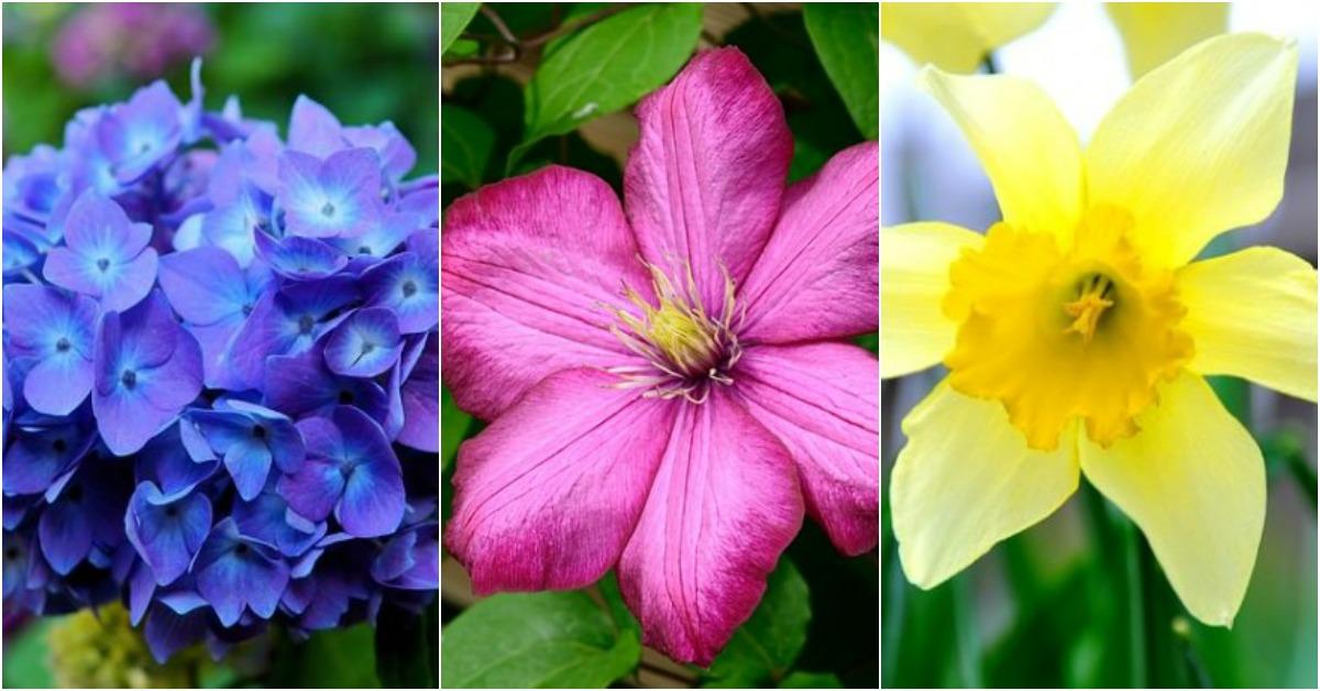 13 flores muy comunes que son venenosas - Plantas ornamentales venenosas ...