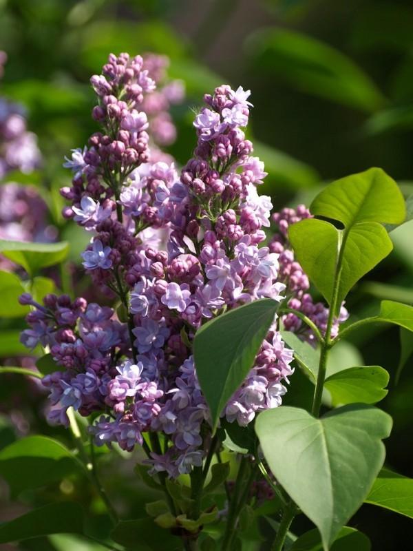 top-10-de-plantas-y-bulbos-de-primavera-01