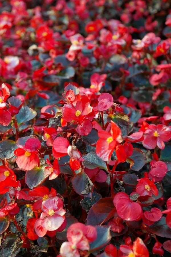 top-10-de-plantas-y-bulbos-de-primavera-04