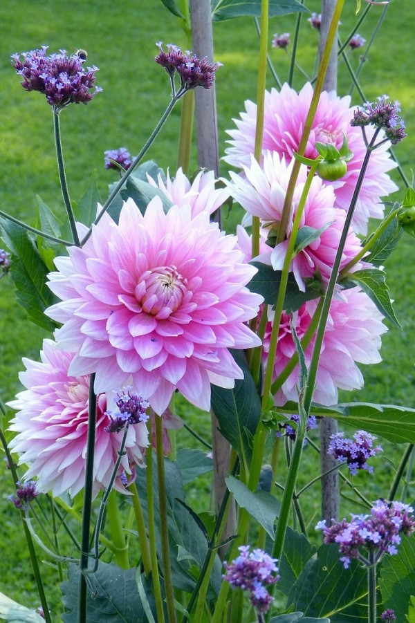 top 10 de plantas y bulbos de primavera