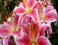 imagen Top 10 de plantas y bulbos de primavera
