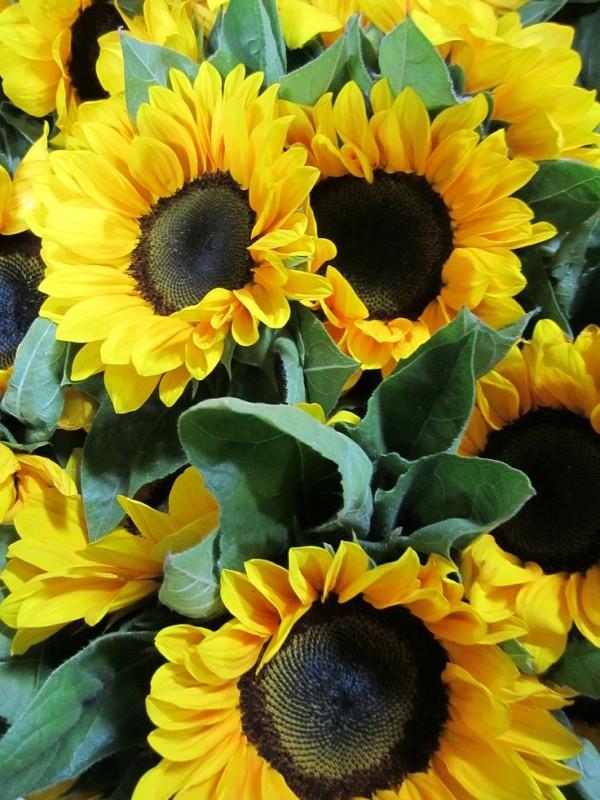 top-10-de-plantas-y-bulbos-de-primavera-08