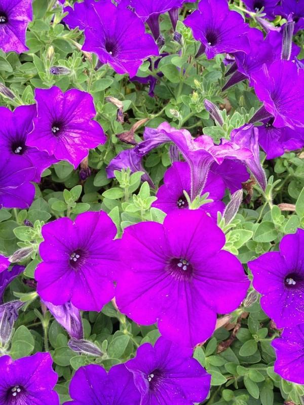 top-10-de-plantas-y-bulbos-de-primavera-09