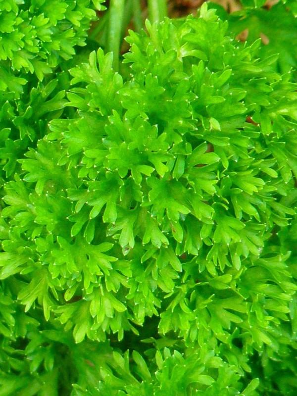 top-10-de-plantas-y-bulbos-de-primavera-10