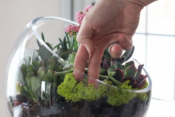 un-jardin-de-suculentas-en-un-bol-07