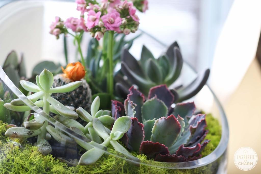 Un jard n de suculentas en un bol - Composizione piante grasse da interno ...