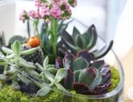 imagen Un jardín de suculentas en un bol